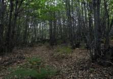 Protección y fortalecimiento de bosques locales.