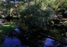 Recuperación de balsas, pozas, etc. como puntos de agua para favorecer la recuperación de anfibios y otras especies acuáticas de interés.
