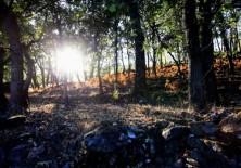 Reforestación mediante la utilización de especies autóctonas.