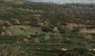 Zona a reforestar