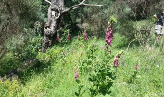 Realización de inventario de flora y fauna
